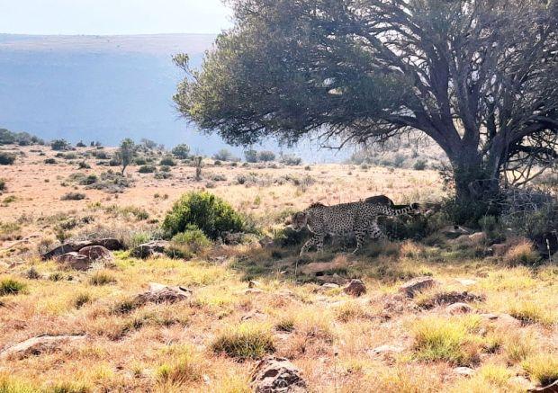 Madoda at Mount Camdeboo